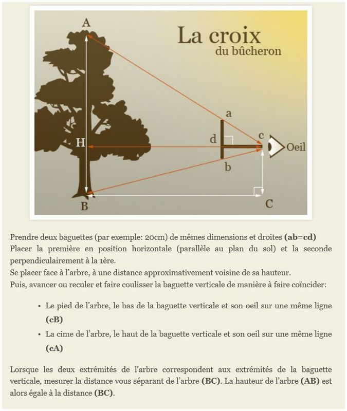 ARBRES REMARQUABLES  de L'ARREE Croix_10