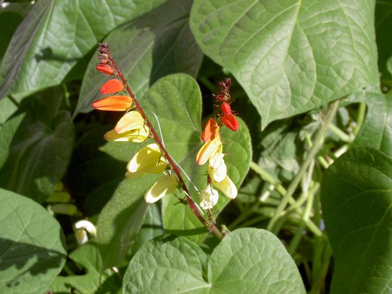Floraisons du mois d'Août Pict6211