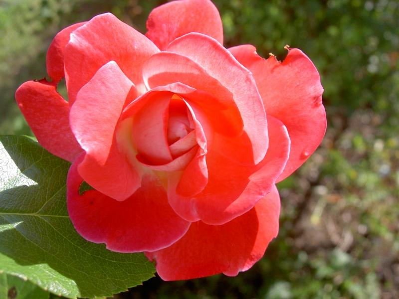 Floraisons du mois de septembre Pict6332