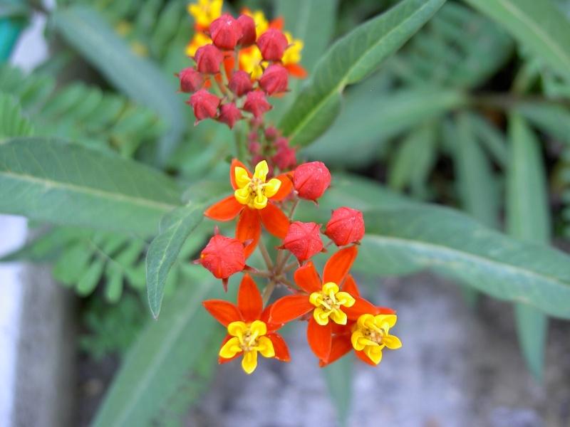Floraisons du mois de septembre Pict6333