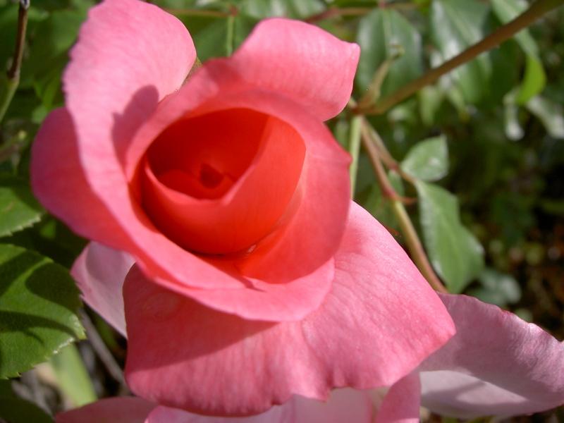 Floraisons du mois de septembre Pict6334