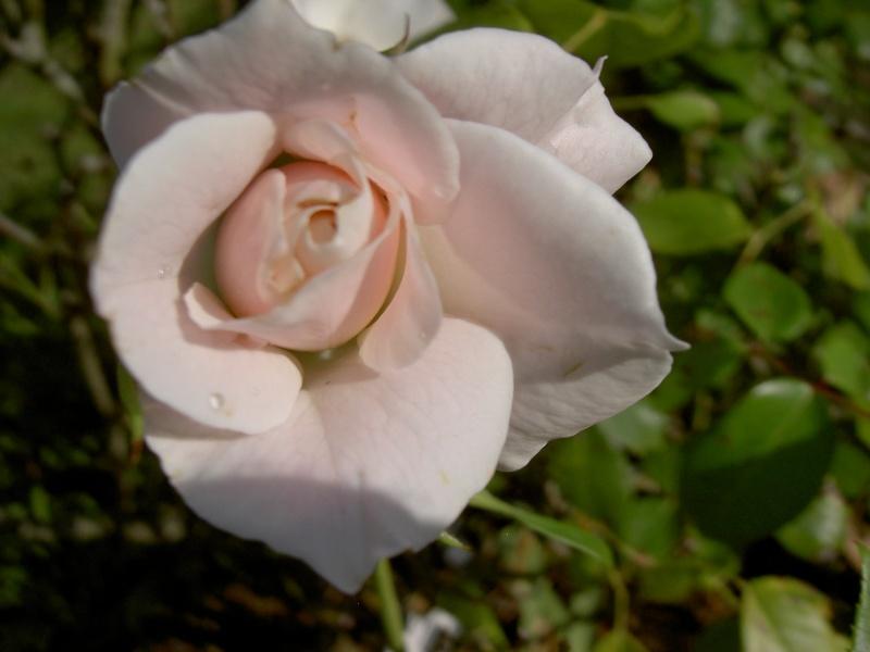 Floraisons du mois de septembre Pict6335