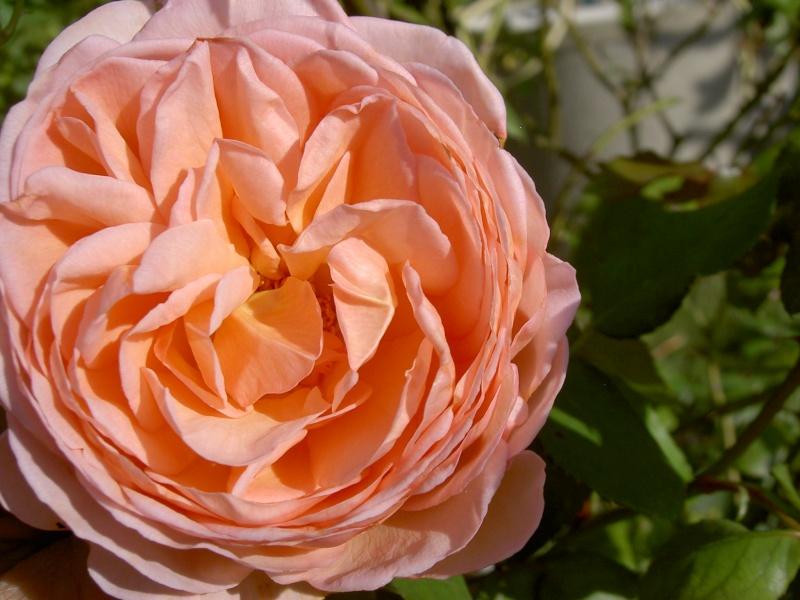 Floraisons du mois de septembre Pict6336