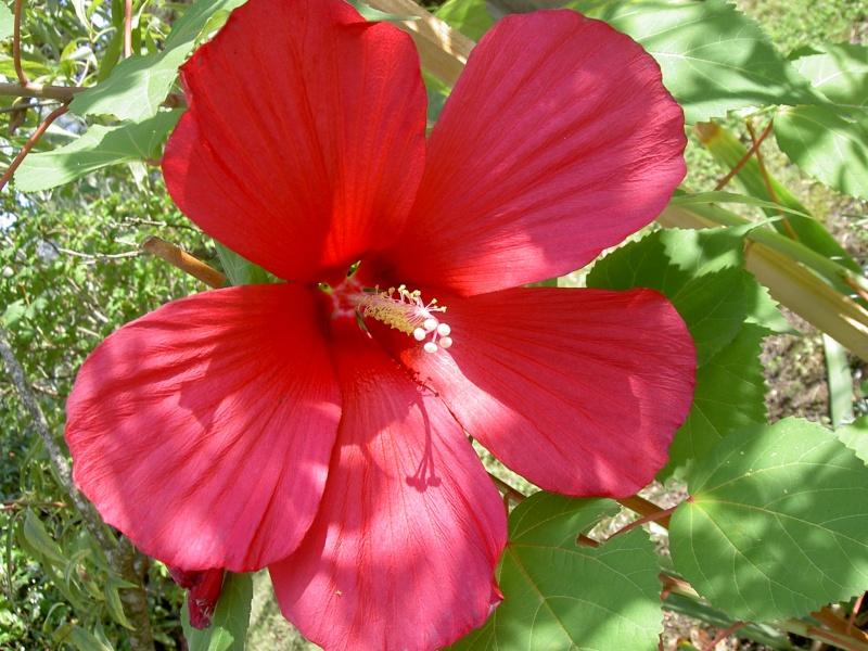 Floraisons du mois de septembre Pict6337