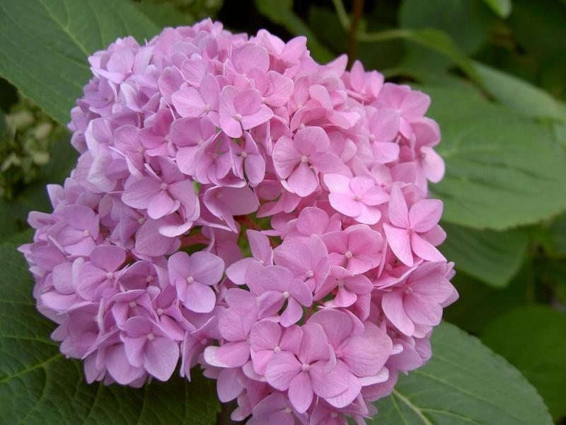 Floraisons du mois de septembre - Page 2 Pict6344