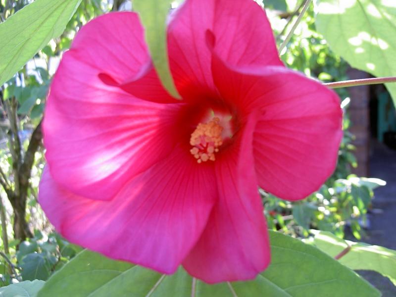 floraisons d'octobre - Page 5 Pict6510