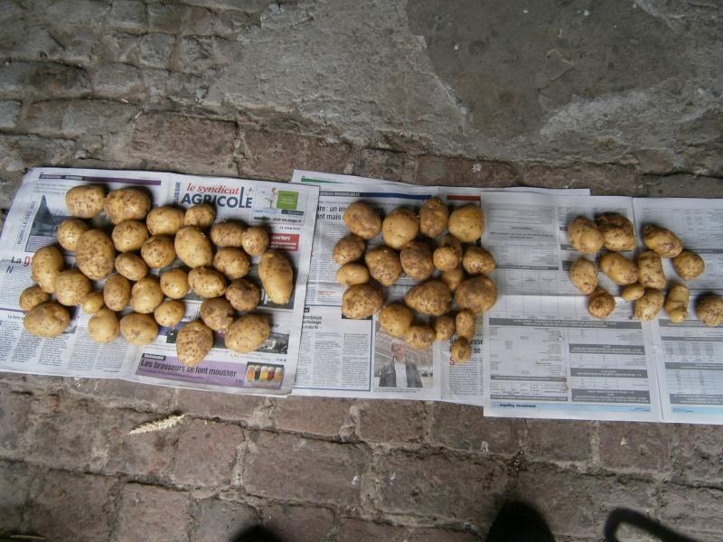 évolution des cultures de pommes de terre 2011. - Page 5 Photos10