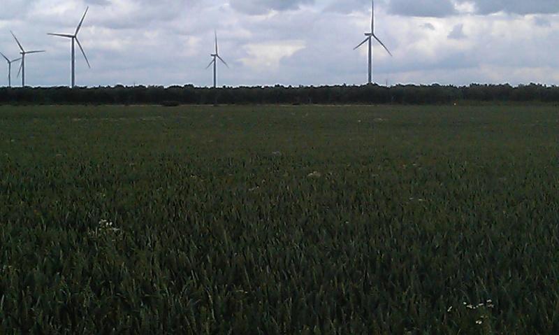 nuisibilté du vulpin/matricaire/ray-grass Blasal19