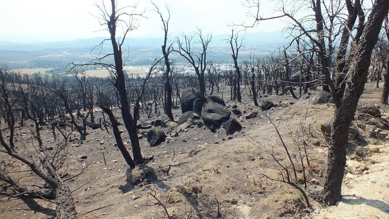 Incendie à la Jonquera. Incend10