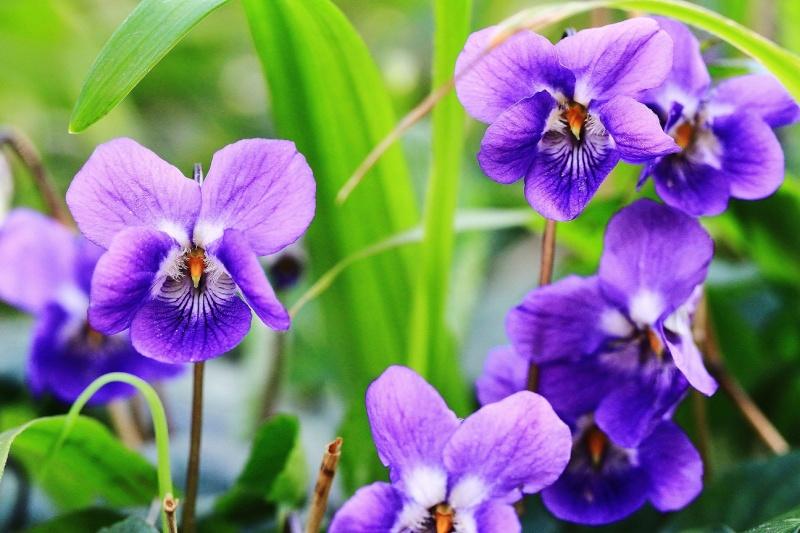 Flora di Corsica Img_9511