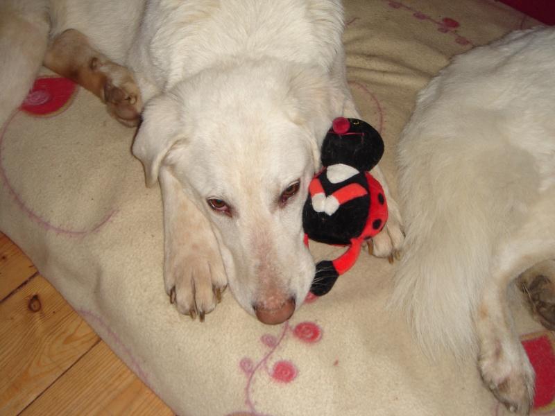 Riesenbaby Pupo verwandelt sich in Liam - vermittelt Dsc04711