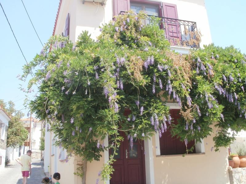 Greece, Island of Lesvos Mylesv15