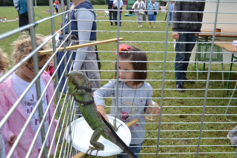 Un dimanche à la campagne 2011 - Parc du lycée agricole de Fondettes  Dsc_0031