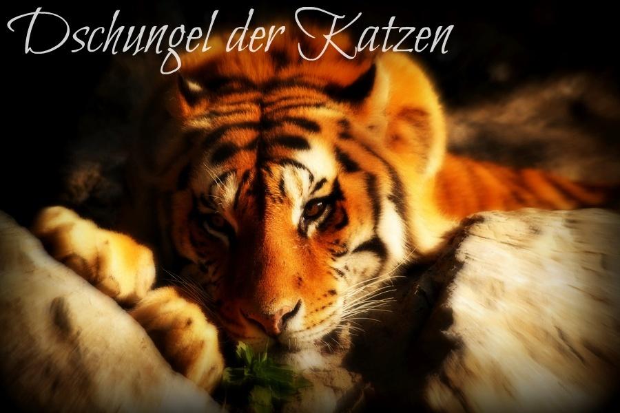 Dschungel der Katzen