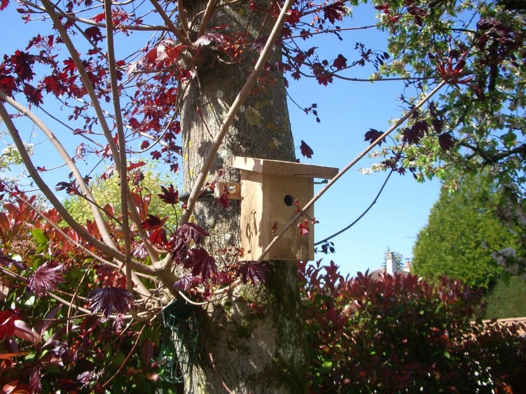 Observation facile des oiseaux - Page 5 Imgp6714