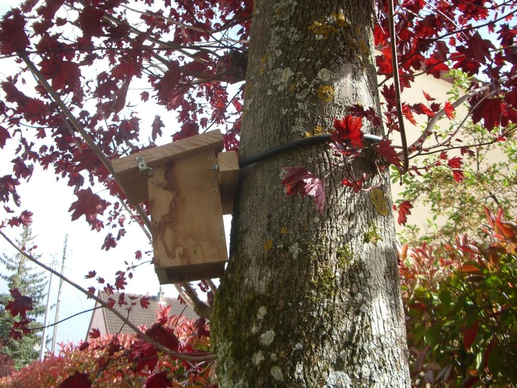 Observation facile des oiseaux - Page 5 Imgp6715