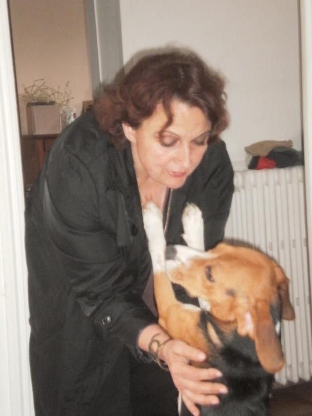 MARLEY, beagle mâle, 10 mois (77) P9140619