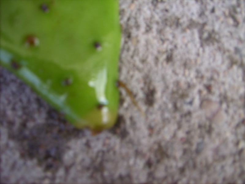 bouture cactus ! Lpic7017