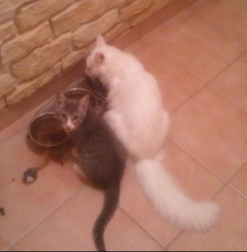 GUIZMO (Cassis, chaton mâle, né le 10 mai 2011, identifié 250269604305582) - Page 5 Photo024