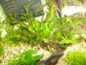 Mon aquarium 60L Juwel P1010515