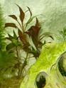 Mon aquarium 60L Juwel P1010518