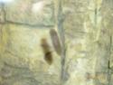 Mon aquarium 60L Juwel P1010612