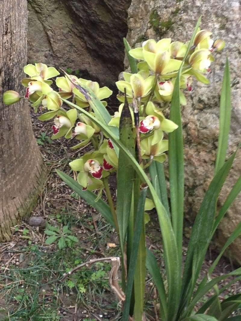 Quelques orchidées chez Cloo - Page 2 Img_0010