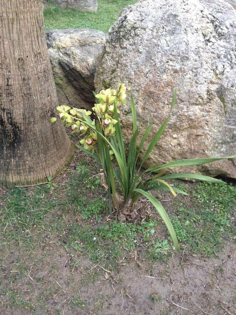 Quelques orchidées chez Cloo - Page 2 Img_0012