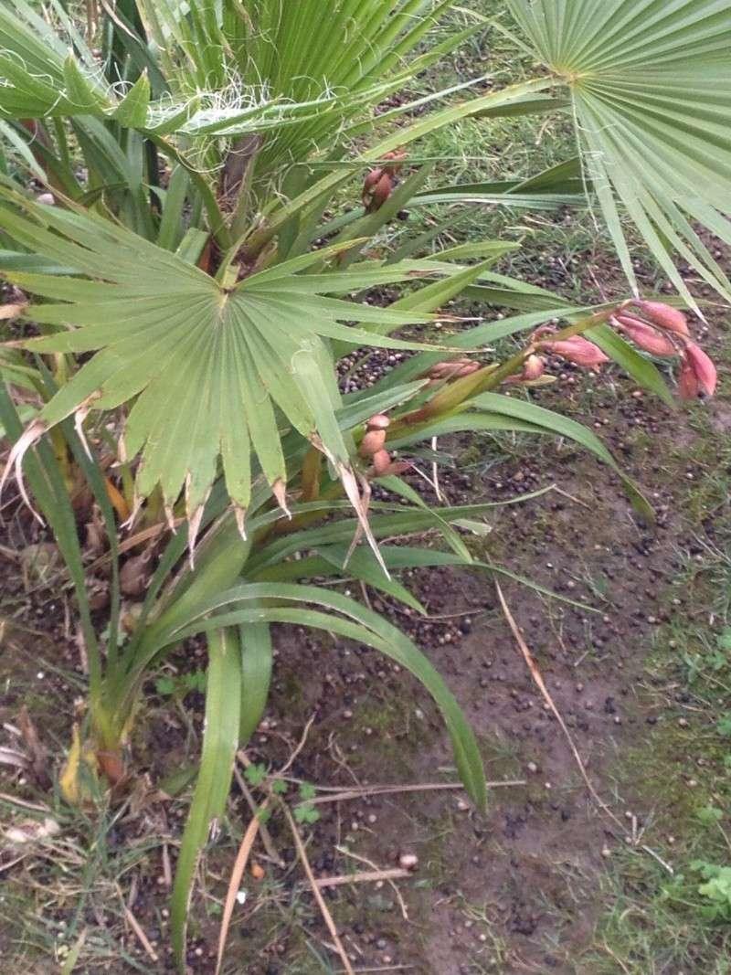 Quelques orchidées chez Cloo - Page 2 Img_0013
