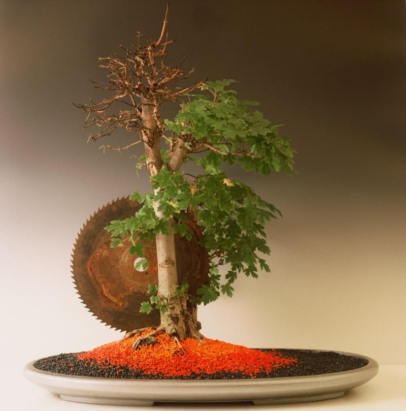 Wolf-D. Schudde - Living Art Bonsai 00001110