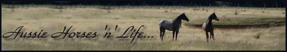 Aussie Horses 'n' Life