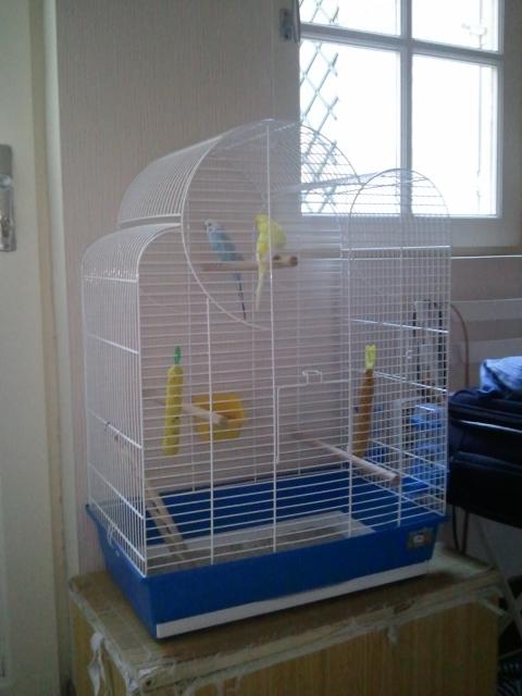 une cage pour 4 perruches Wp_00010