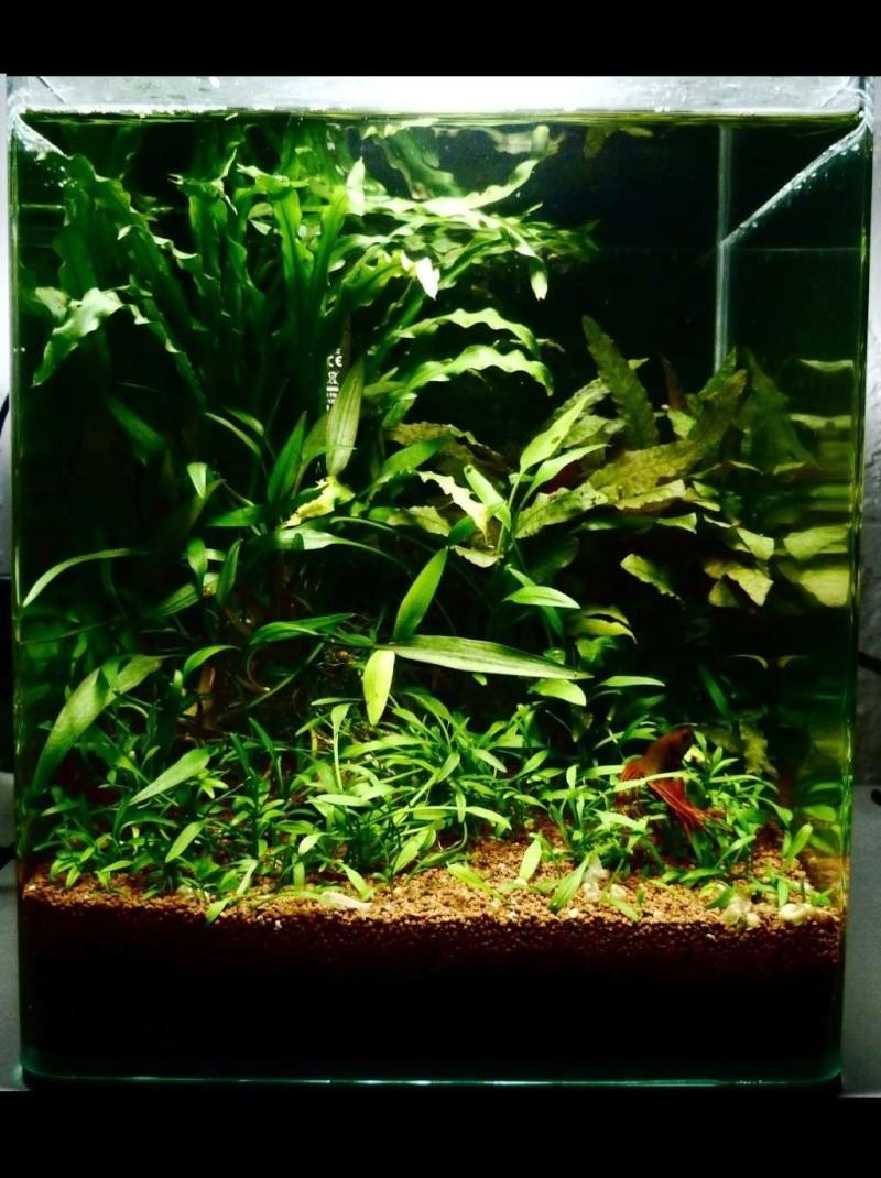 Aqua Nature P1000510