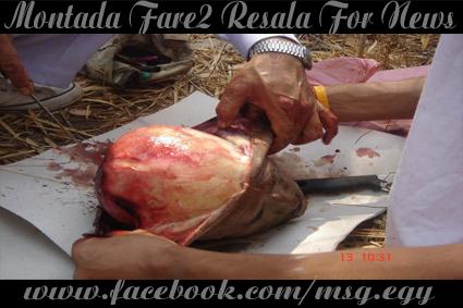 بالصور .. فى الدول المتقدمه يأكلون لحوم البشر الاموات  810