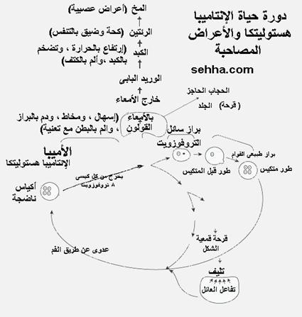 مختبر مجالس الوفاء ( 2) - صفحة 1