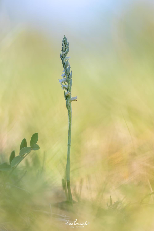 Un peu éloigné des orchidées - Page 3 Img_3813