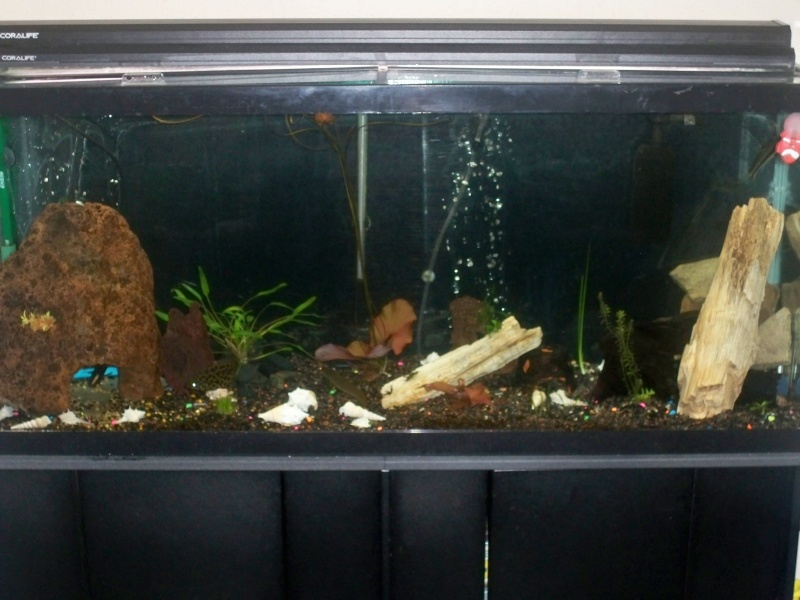 My 5 fishtanks 100_3312