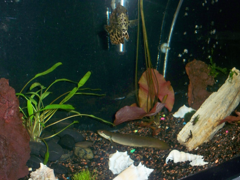 My 5 fishtanks 100_3313