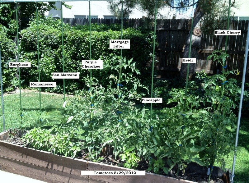 Tomato Tuesday: N.Cal & inland valleys Toms_514