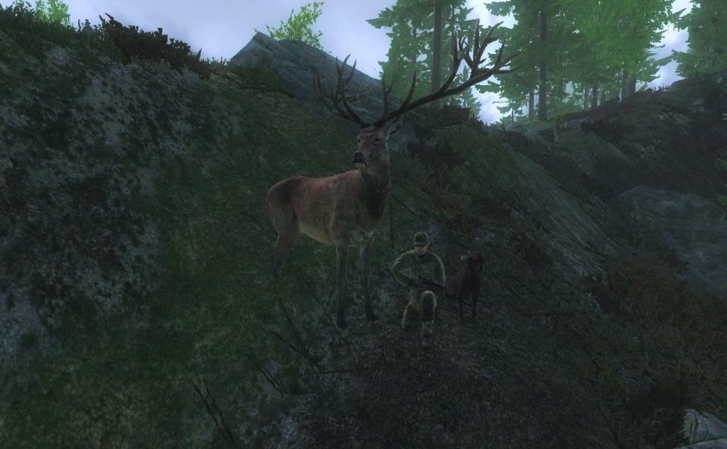 Cervo rosso 2021-010