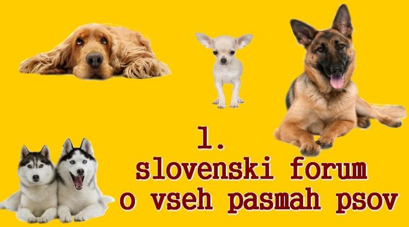 Hov-Hov, forum pasem psov