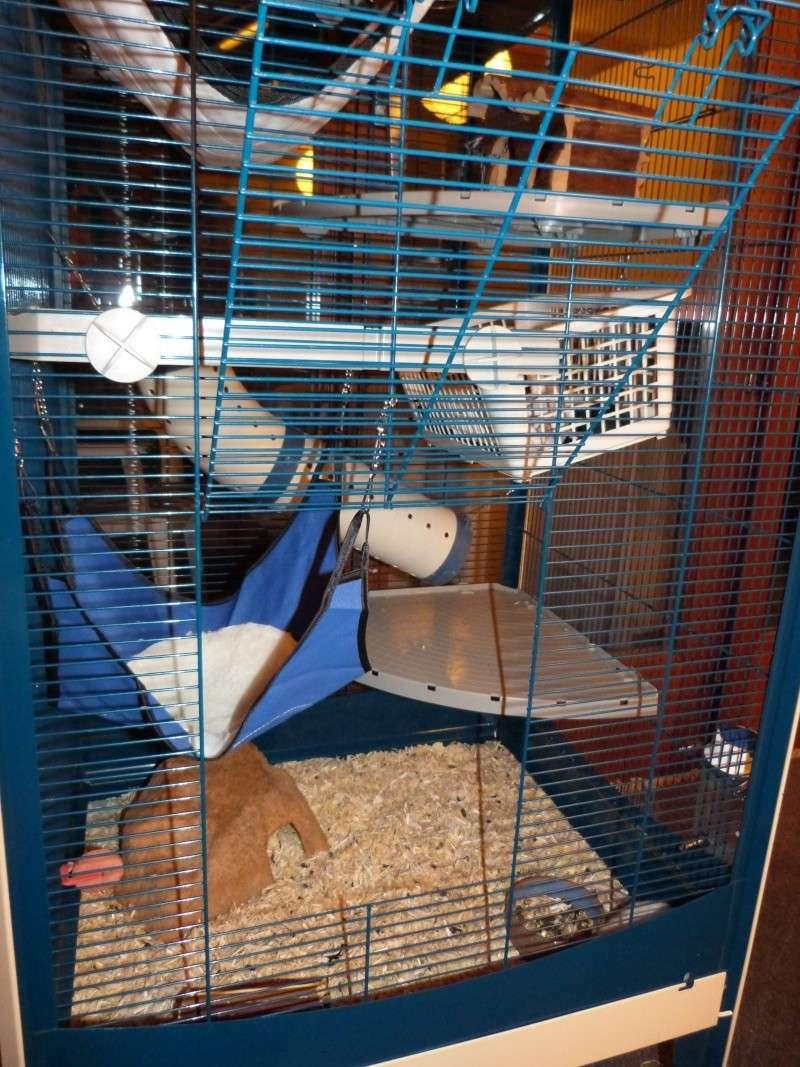 Ma cage P1030513