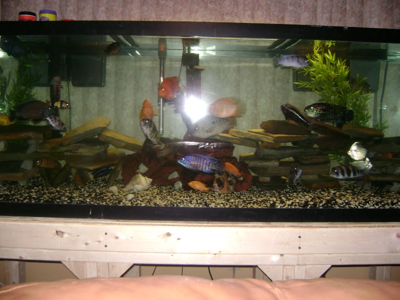 DIY 180 GAL. STAND w/ PICS Pictur20