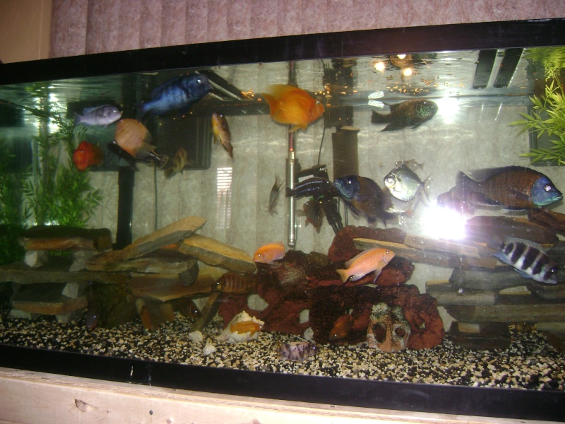 DIY 180 GAL. STAND w/ PICS Pictur21