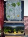 Petit mur végétal Dsc01412