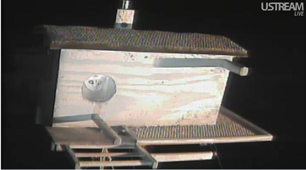 La webcam d'une chouette effraie  - Page 3 Chouet21