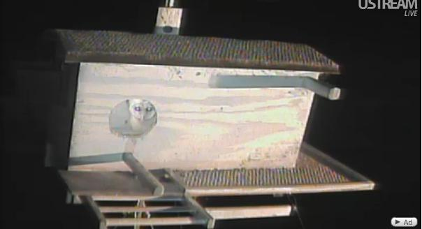 La webcam d'une chouette effraie  - Page 3 Chouet22