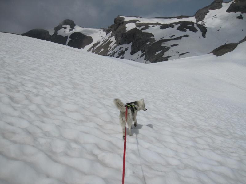Le glacier de la Plaine Morte 1441