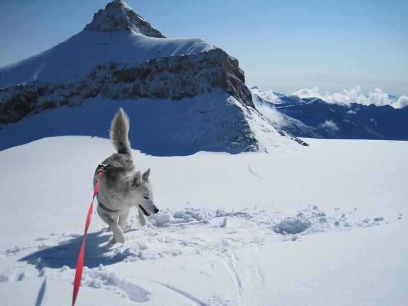 Saskia dans la neige poudreuse de juillet 560