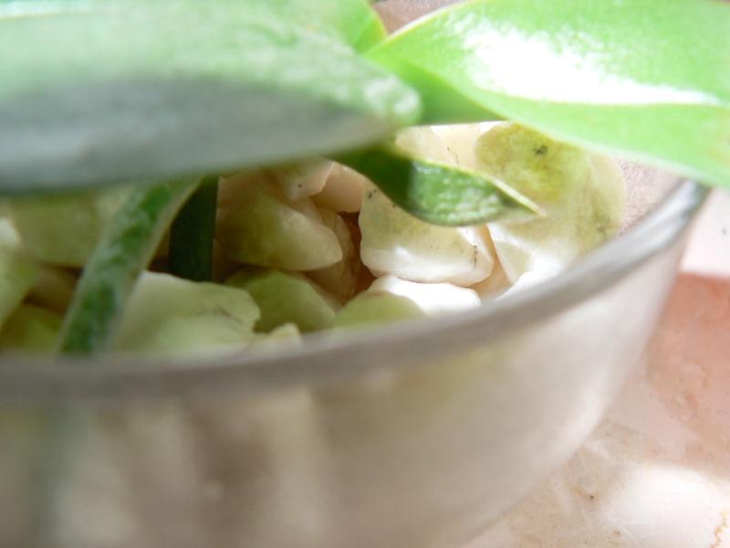 Uprawa wazonowa w keramzycie - Page 2 P1090138